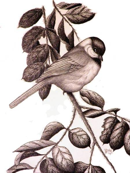 A-Flirtin'- Blackcapped Chickadee