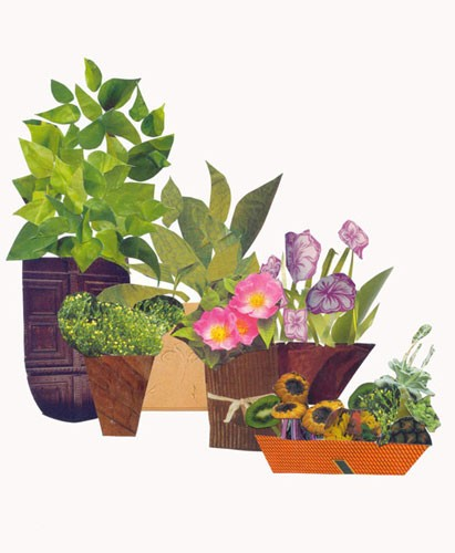 plants in a pot collage