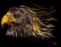Portrait of a Fire Eagle